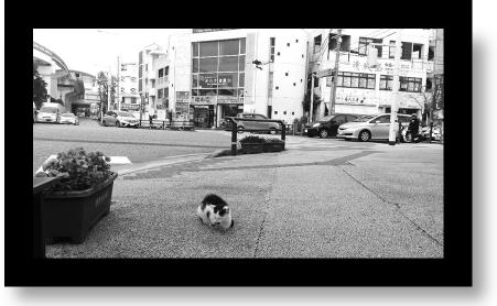cat_on_street
