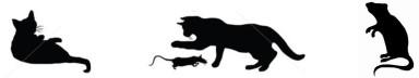 three_cat_rat_shadow