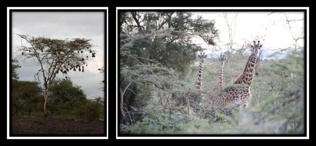crista_kenya_day4_pic9