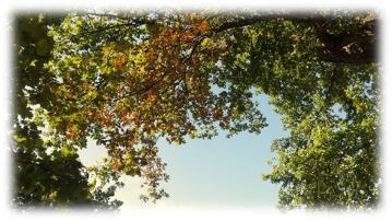 tree_shade1