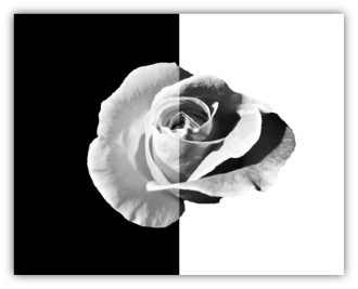 flower_bw_wb_frame_small_size