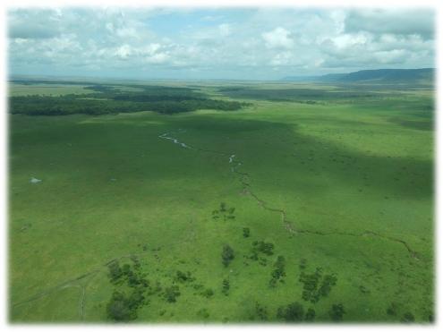 green_plains